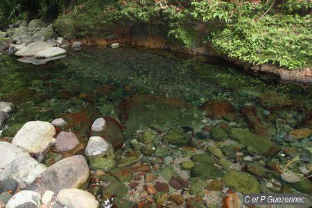 Bassin paradise - Petit bassin d eau dijon ...